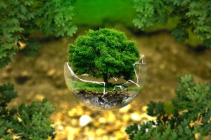 picture of a tree in a glass